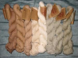 Bawełna organiczna - włókno