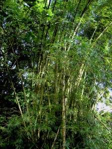 włókno bambusowe